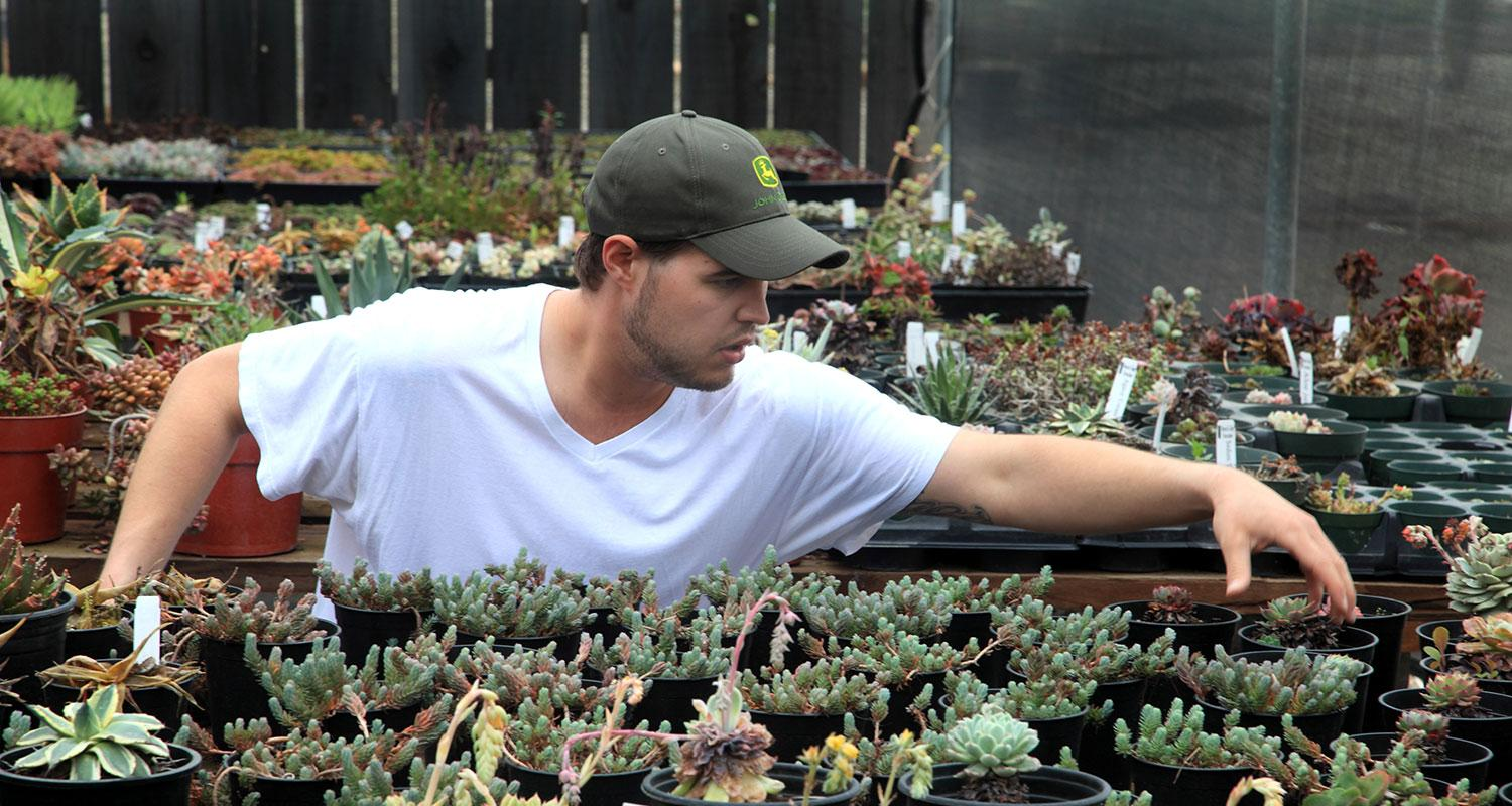 Agriculture Division's Annual Plant Sale