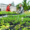 MC Agriculture Division's Annual Plant Sale