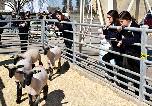 FFA Field Day More Than Just A Competition