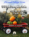 U-Pick Pumpkin Sale